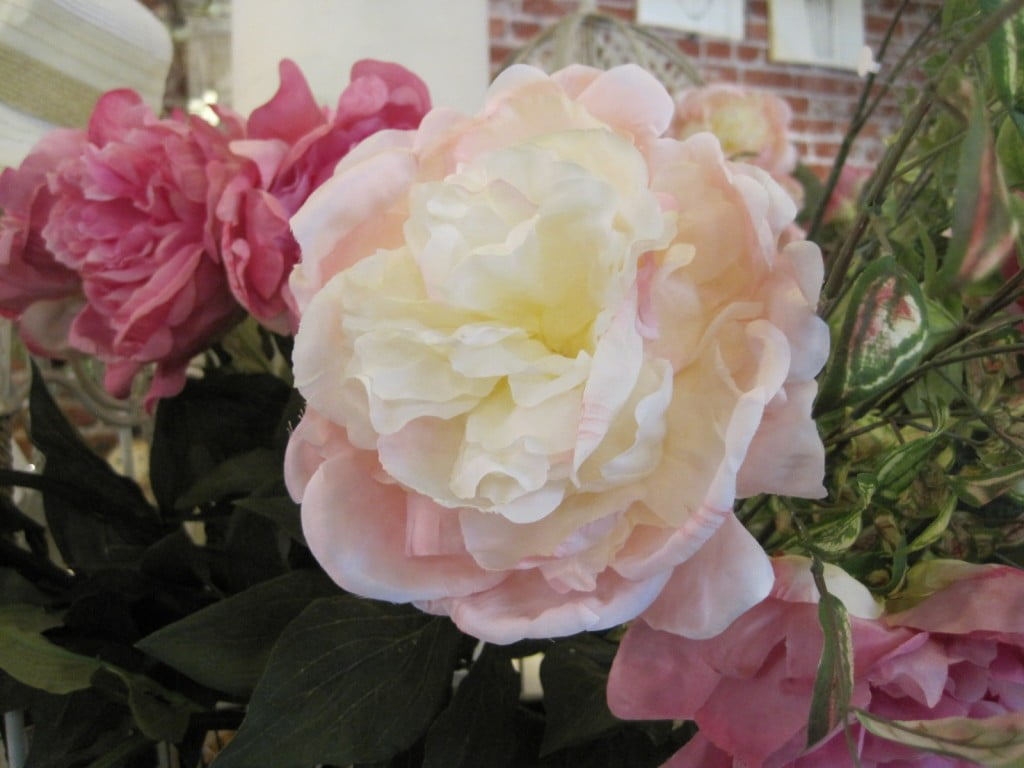 pink rose cu