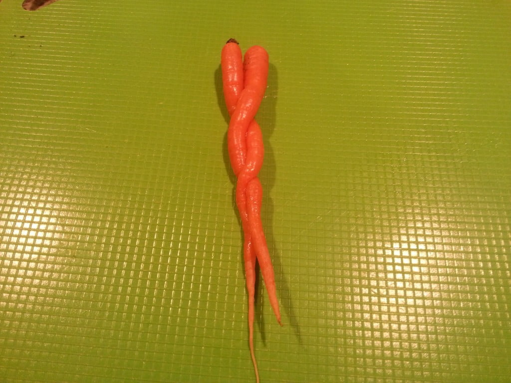 carrots entwined vertical