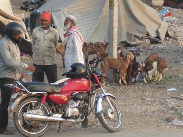 goats n men