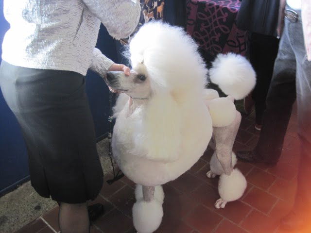 poodle done