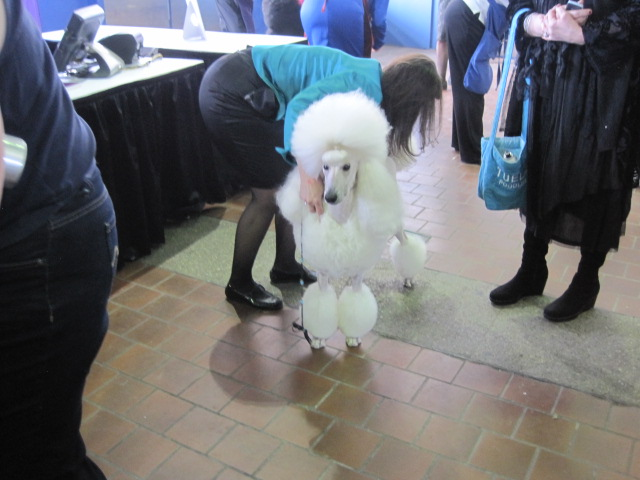 poodle done2