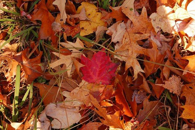 autumn-meditation