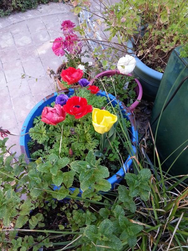 Pot of flowers ctyd