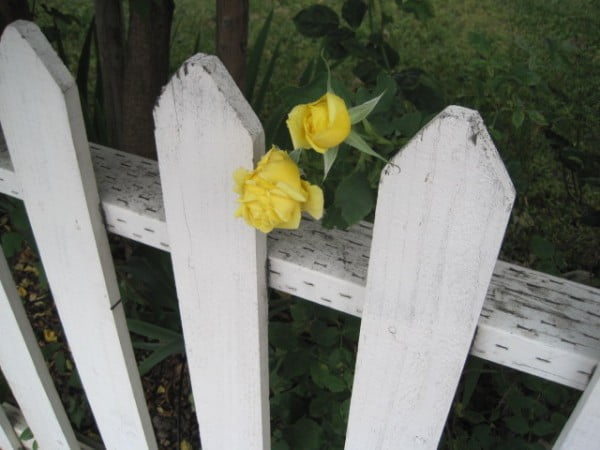 picket fence nice5