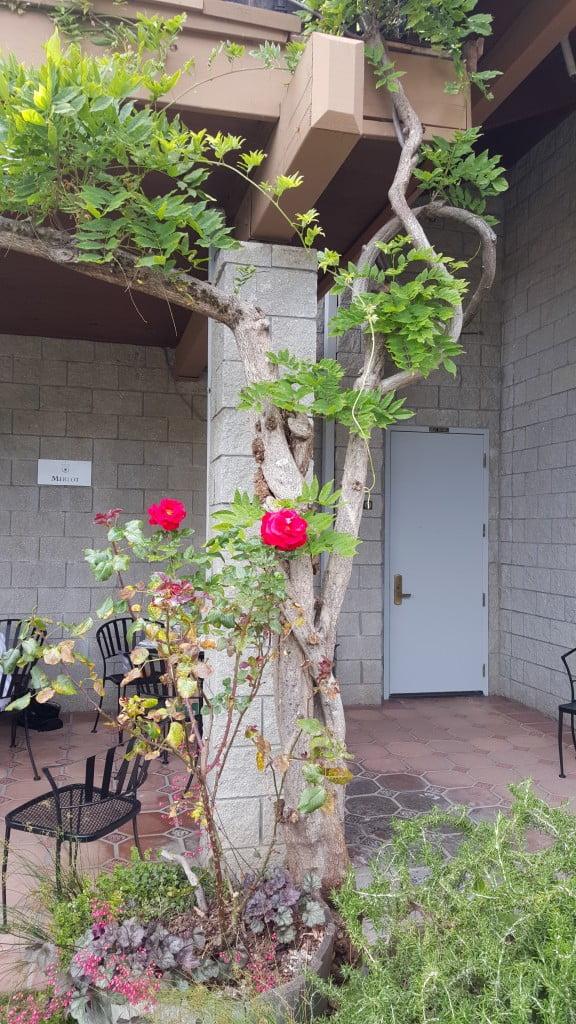 Byington tree patio