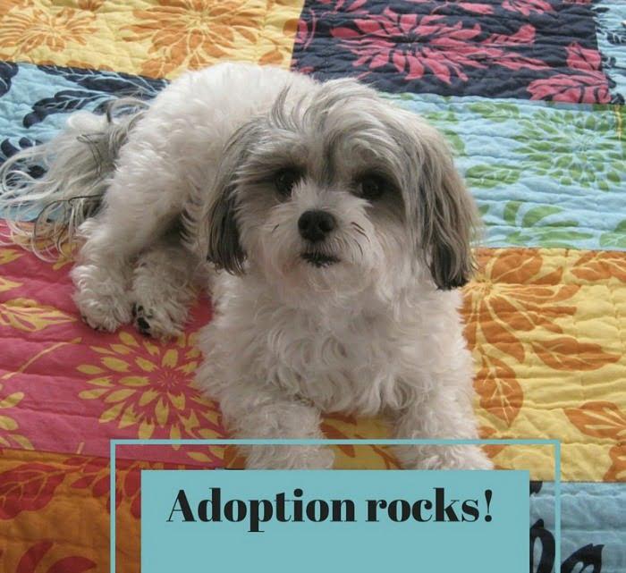 pet-adoption