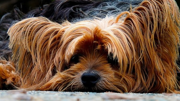 dog-200942_640