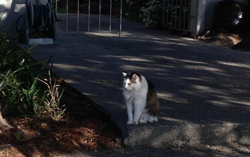 cat-mayor